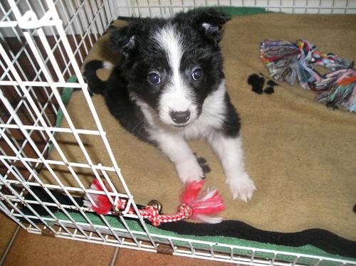 Gallery - North Devon Animal Ambulance - Cute Animal Pictures
