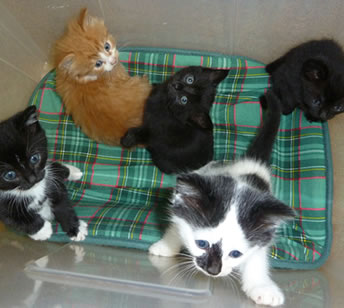 Cat Rehoming North Devon - Rehoming a Cat - Cat Rehoming ...