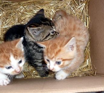 cat rescue north devon   cat rescue centres   rescue cat