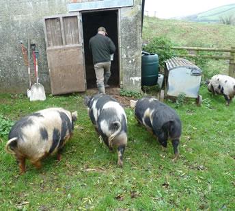 Foal Farm Animal Rescue North Devon - Farm Animal Welfare