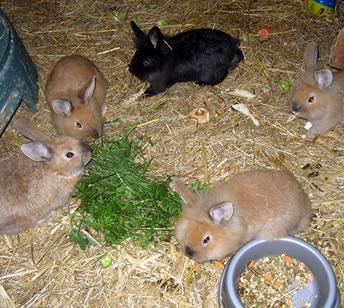 Animal Shelter North Devon - Volunteer Animal Shelter ...
